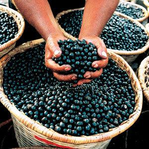022008-acai-berry