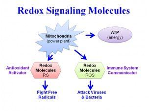 redox-signaling