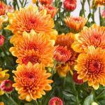 Indoor Plants that Absorb Formaldehyde