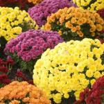 Indoor Plants that Filter Xylene
