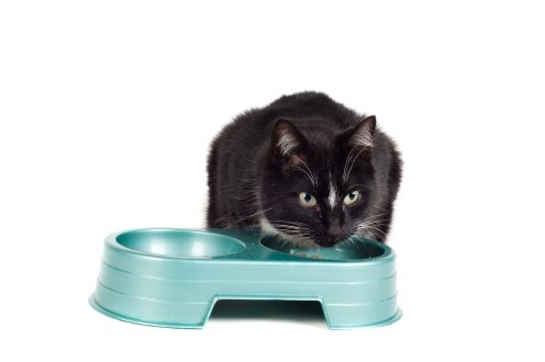 How to Choose a Raw Food Diet for Your Cat