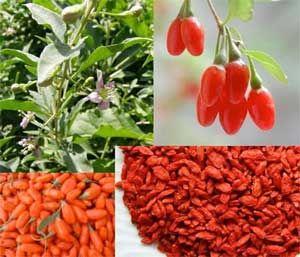 Goji Berry Benefits