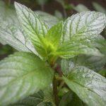 8 Natural Cures For Acid Reflux
