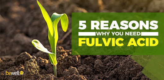 What Is Fulvic Acid and Why Is It Important for Your Health