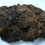 What Is Humic Acid?