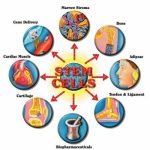 Being in the Know: The Latest Developments in Stem Cell Research