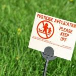 Top 10 Fruits and Vegetables Loaded With Pesticides