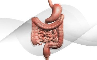 Keys To a Healthy Digestive System