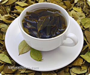 Top Herbal Teas for Tooth and Bone Health