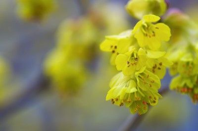 10 Powerful Uses of Witch Hazel For Natural Healing and Skincare