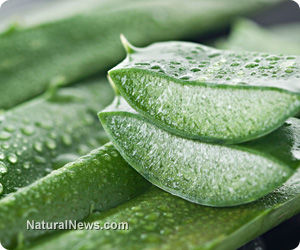 Top 5 Foods to Fix the Gut Issues