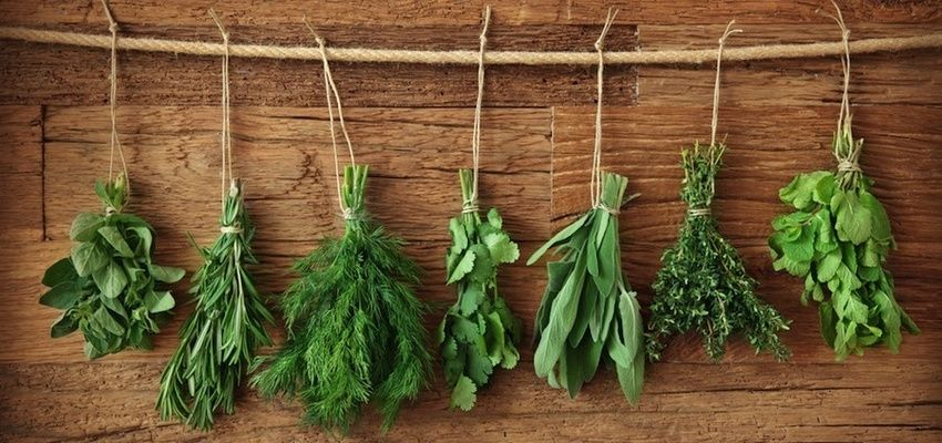 Top 10 Healing Herbs to Grow At Home