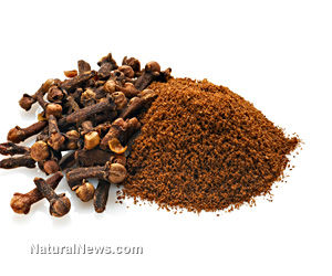 Clove Spice: A Potent Defense against Many Ailments