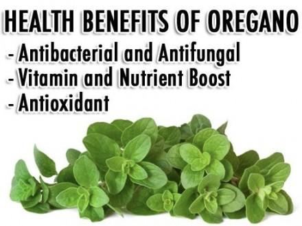 Endless Health Benefits Of Oregano Oil