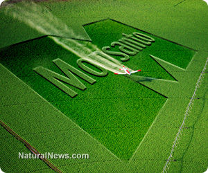 Roundup Herbicide Linked To the Global Rise of Gluten Intolerance