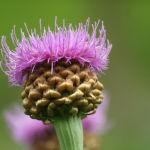 6 Best Anti-Aging Longevity Herbs