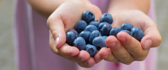 Blueberry's Health Benefits and Fun Facts