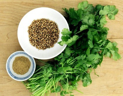 Coriander: A Gateway to Health