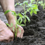 5 Reasons That Will Inspire You To Grow Your Own Food