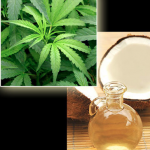 Coconut Oil & Cannabis – The Cutting-Edge Cancer Miracle