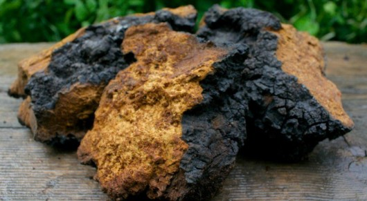 How Chaga Mushroom Enhances Your Health