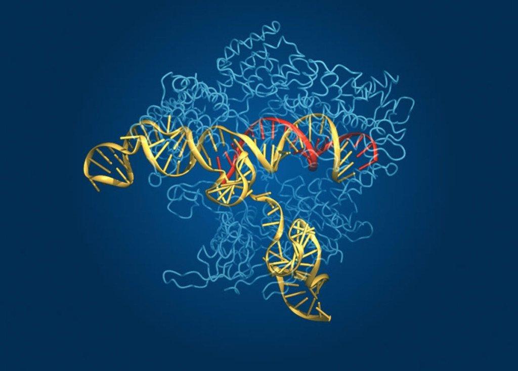 gene expression