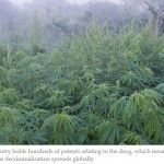 China Set to Benefit from International Cannabis Trade, Post Legalization