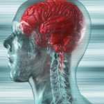 The Link Between Your Brain & The Immune System