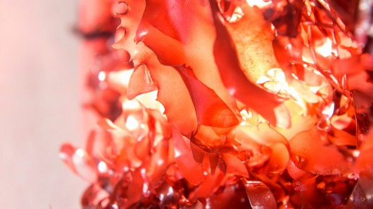 Meet the Seaweed That Tastes Like Bacon