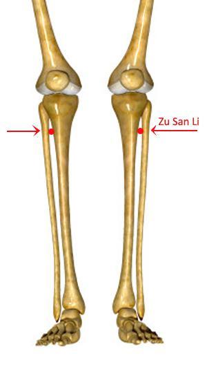 zusanli-skeletal