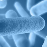 Can Gut Flora Have an Effect on Stroke Damage?