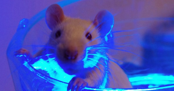 Experiments in mice have shown the dangers of fluorescent lights