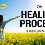 Body Tissue Regeneration Through Nutrition