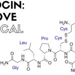 Oxytocin: The Warm Fuzzies of Brain Chemistry