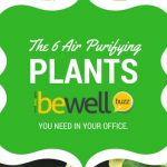 6 Air-Purifying Plants You Need in Your Home and Office