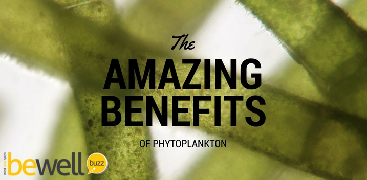 benefits of phytoplankton