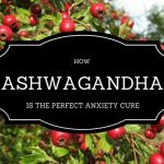 How Ashwagandha Is The Perfect Anxiety Cure