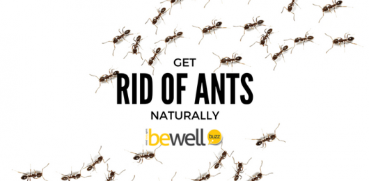 <thrive_headline click tho-post-42629 tho-test-128>How To Get Rid of Ants Naturally</thrive_headline>