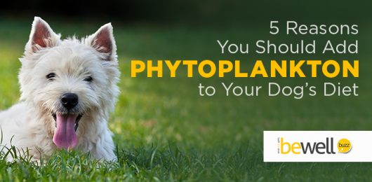 5 Reasons You Should Add Phytoplankton to Your Dog's Diet