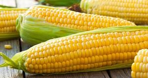 Maltodextrin: US manufacturers primarily derive the starch from corn.