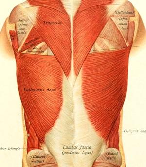 How to Take Care of Fascia: Lumbar fascia
