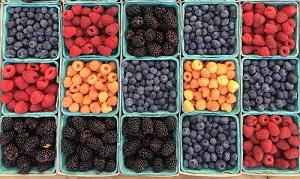 Moringa Health Benefits: Polyphenol-rich fruits