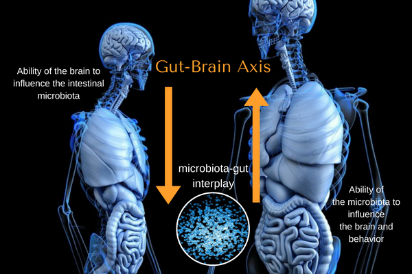 Gut Brain Connection >> The Gut Brain Connection What You Need To Know Bewellbuzz