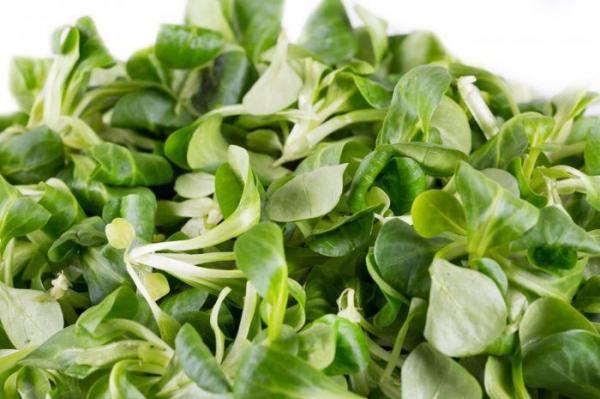 Spring Foods: Watercress