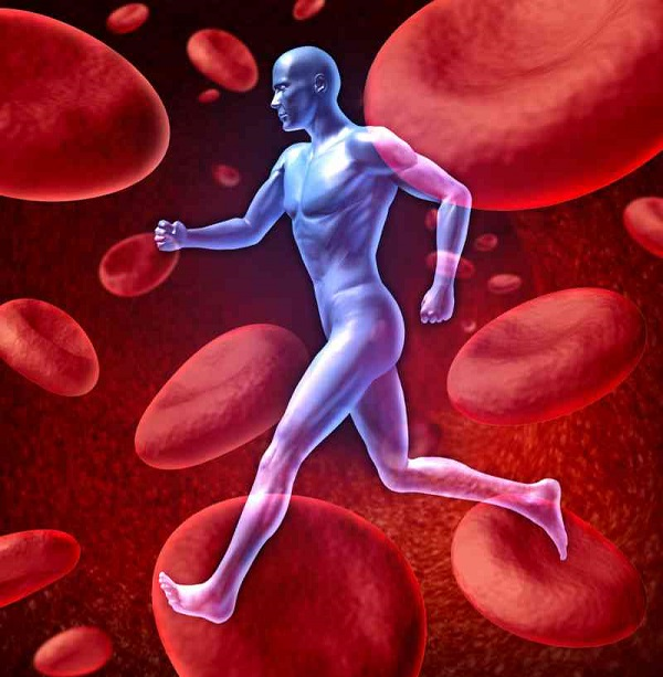 Mismanaged blood flow could be the root cause of muscle pain and achiness and the sense of fatigue that fibromyalgia patients experience.