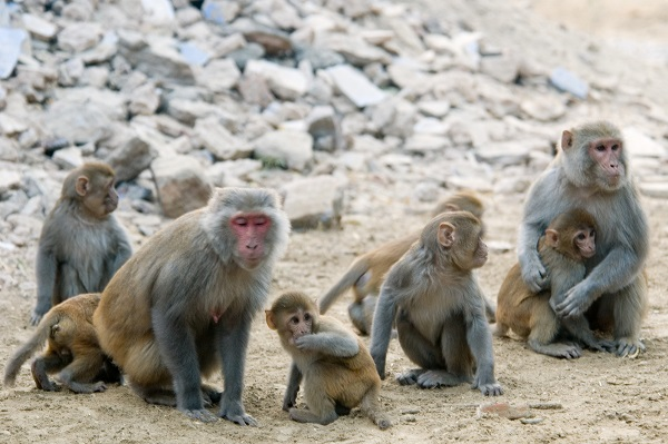 Rhesus monkeys methylation was seven years younger than average when put on a calorie restricted diet over a significant time period.