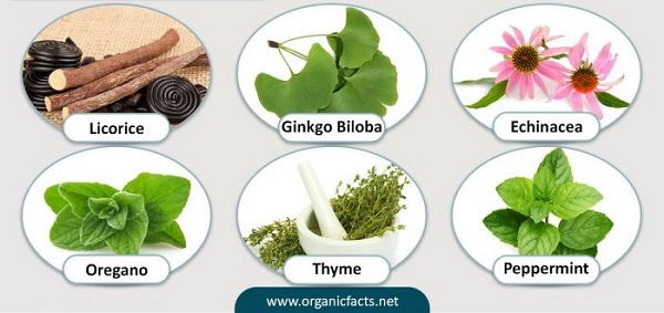 The most effective herbs for respiratory health.