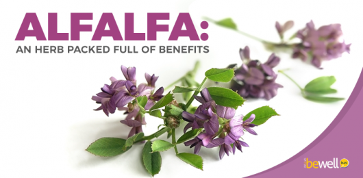 The Surprising Health Benefits of Alfalfa