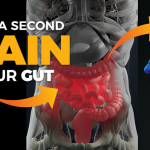 The Gut-Brain Connection Mystery Explained