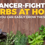 Here's Why You Should Grow These Powerful Cancer-Healing Herbs